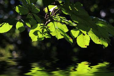 sommerliches Grün