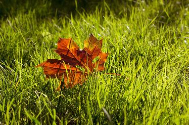 Herbstgold im Grasbett