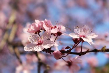 Sinfonie des Frühlings