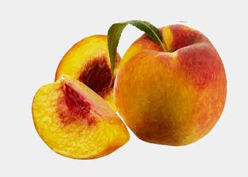 Bild mit Früchte, Pfirsiche, Malerei, Frucht, Obst, Küchenbild, Stillleben, Küchenbilder, KITCHEN, frisch, Küche, Kochbild, gemalte Früchte, Pfirsich