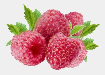 Bild mit Früchte, Beeren, Malerei, Frucht, Obst, Küchenbild, Himbeere, Himbeeren, Stillleben, Küchenbilder, KITCHEN, frisch, Küche, Kochbild, gemalte Früchte