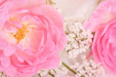 Bild mit Natur, Blumen, Rosen, Blume, Pflanze, Rose, Flower, Blüten, VINTAGE, Makroaufnahmen, blüte