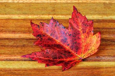 Bild mit Natur, Herbst, Blätter, Blatt, Makroaufnahmen, Fotografie, herbstlich, herbstblatt