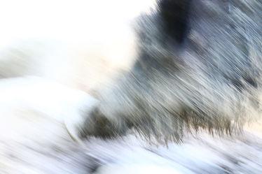 Bild mit Wildschwein, Animal, Wildtier