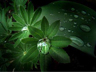 Blätter mit Wassertropfen 2