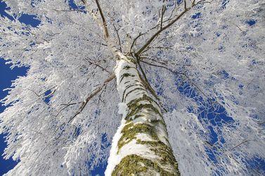 Schnee Welten