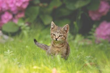 Bild mit Tiere, Tiere, Haustiere, Katzen, Katze, Kater, Tierkinder, Haustier, kitty, Tierkind