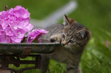 Kätzchen an der Waage