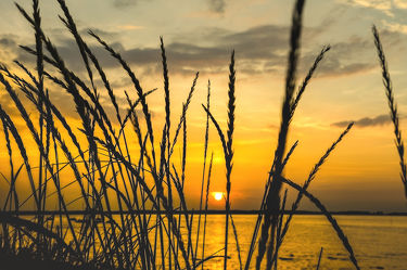 Bild mit Natur, Wasser, Sand, Sommer, Sonne, Strand, Meerblick, Meer, Landschaft, Gras, Am Meer, Strand und Meer, Strandhafer, Strandgras, Sommerstrand