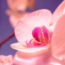 Romantische Orchidee mit Tropfen