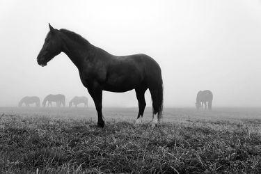 Bild mit Tiere,Pferde,Tier,Pferd
