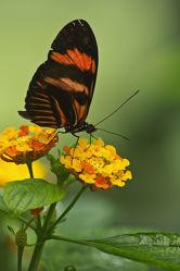Schmetterling auf einer gelben Blüte