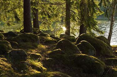 Wald in Schweden 2