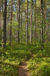 Waldweg im Nationalpark Patvinsuo - Finnland