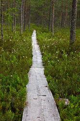 Holzpfad im Nationalpark Patvinsuo, Finnland