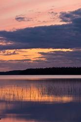 Gräser im See Lentua, Finnland
