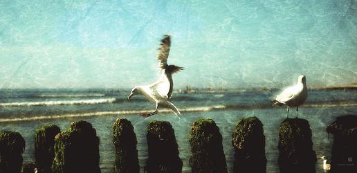 Bild mit Meere, Vögel, Möwen, Leuchttürme, Strand, Meer, Nordsee, Möwe, See, Am Meer, VINTAGE, Leuchtturm, ozean