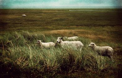 Bilder mit Tierwelt
