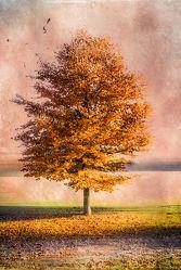 Bild mit Natur, Bäume, Herbst, Baum, Park, VINTAGE