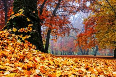 Bild mit Bäume, Wälder, Herbst, Wald, Baum, Park
