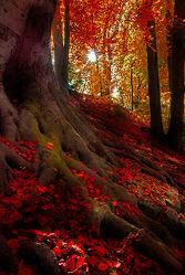 Bild mit Natur, Bäume, Wälder, Herbst, Wald, Baum, Park