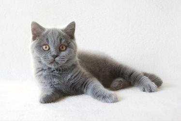 Bild mit Tiere, Haustiere, Katzen, Tier, Katze, Kater, Haustier, kitty, hauskatzen, hauskatze, heimkatze, heimkatzen