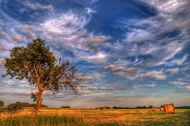 Der Alte Kirschbaum