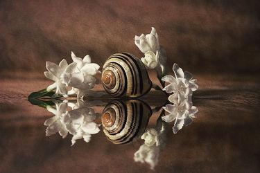 Bild mit Blumen, Schnecken, Blume, Schnecke, Stilleben, Blüten, blüte, flieder, schneckenhaus