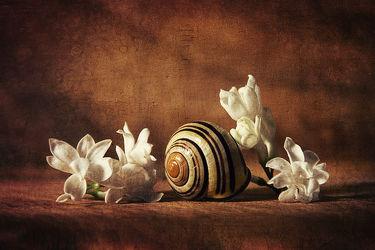 Bild mit Blume, Stilleben, flieder, schneckenhaus, Schneckenhäuser