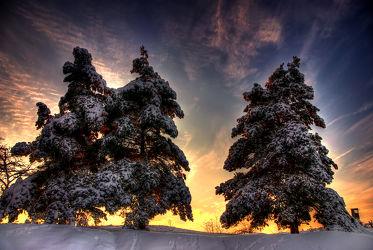 Schneeglühen