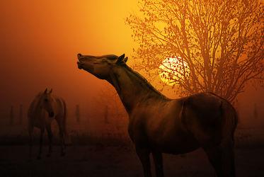 Bild mit Tiere, Herbst, Sonnenuntergang, Sonnenaufgang, Pferde, Tier, Kinderbilder, Kinderzimmer, Pferd, Hengst, Stute, Mustang, pony, Hafflinger