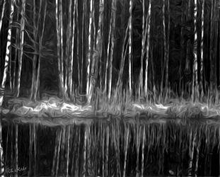 Bild mit Wälder, Wald, Wald, Black and White, schwarz weiß, SW, Halloween, gruselig