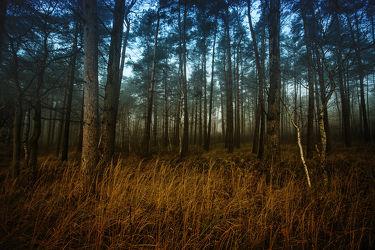 Bild mit Landschaften, Wälder, Wald, Landschaft, Märchenwald, Halloween, Grusel, Dezember, gruselig