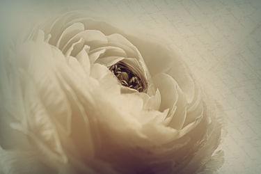 Bild mit Blumen, Blume, Blüten, blüte, Ranunkel