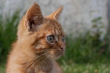Bild mit Tiere,Haustiere,Katzen,Tier,Katze,Katzenbilder,Tierwelt,Kater,Haustier