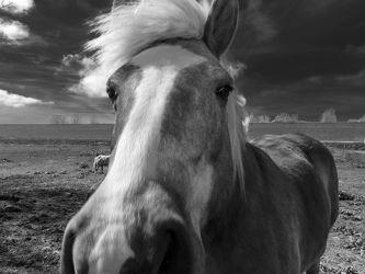 Bild mit Tiere, Pferde, Pferde, Tier, Kinderbild, Kinderbilder, Pferd, Pferd, Portrait, schwarz weiß, reiten, SW, Mustang, pony, Pferdeliebe, pferdebilder, pferdebild