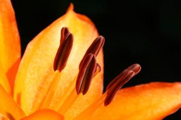 Bilder mit Fotografien Blumen und Pflanzen