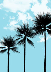 Bild mit Palmen, Palme, Blumen und Pflanzen