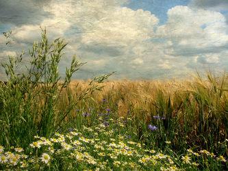 Gräser am Feld II (Textur)