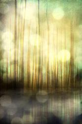 Bild mit Kunst, Wasser, Abstrakt, yammay wässrig, Schatten, Silhouette, natur kunst