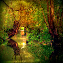 Bild mit Natur, Wasser, Landschaften, Bäume, Gewässer, Wälder, Flüsse, Wald, Baum, Landschaft, mystisch, Fluss