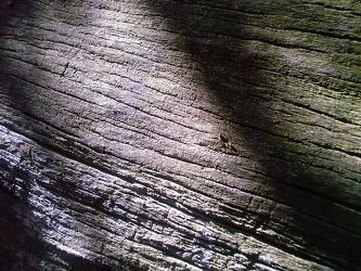 Bild mit Holz, Baum, Baumstamm, Holzstruktur, Hintergrund, Holzbretter, Hintergründe, Rinde, Holzhintergrund, Holzstrukturen, holzoptik