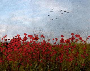 Bild mit Landscape & Nature