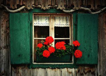 Bild mit Blumen, Holz, Fenster, Blume, rustikal, Blüten, blüte, alt, Rote Blüten, holzfenster, rote blumen