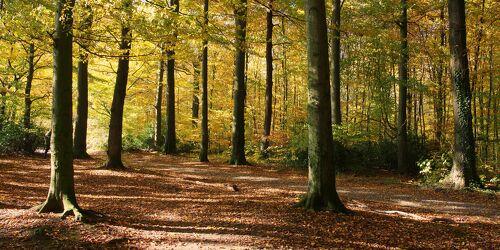 Bild mit Herbst, Wald, Waldlichtung, Waldweg, Herbstblätter, Goldener Herbst, Goldener Oktober, Herbstwald
