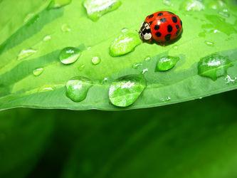 Bilder mit Tiere & Insekten
