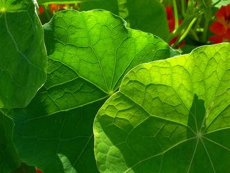 Bild mit Natur, Grün, Pflanzen, Blumen, Kräuter, Blätter, Blume, Pflanze, Blatt, Wildblumen