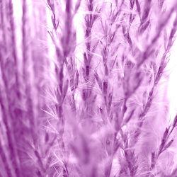 Bild mit Pflanzen, Gräser, Blumen, Lila, Violett, Blume, Pflanze, Gras, Gartenblumen, Weide, Weiden