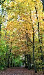 Bild mit Natur, Landschaften, Bäume, Wälder, Sonne, Wald, Baum, Landschaft, Landschaft und Natur