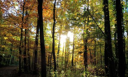 Bild mit Bäume,Herbst,Sonne,Wald,Landschaft und Natur,Herbstsonne,Herbstlicht,Oktober,Herbststimmung,Goldener Oktober